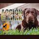 Acción Canina Radio 40