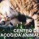 TorreLoMola - Programa en el Refugio Animal