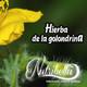 Nutribella - HIERBA DE LA GOLONDRINA