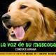 La voz de tu mascota edicion nº 90 24-6-2017
