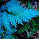 Fascinacion por las Plantas - 101 - Plantas azules