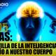 T4X05: La pastilla de la inteligencia y el daño a nuestro cuerpo