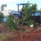 Testimonio de Adolfo Abreu, fundador de la Empresa Agroindustrial Victoria de Girón - Cuba