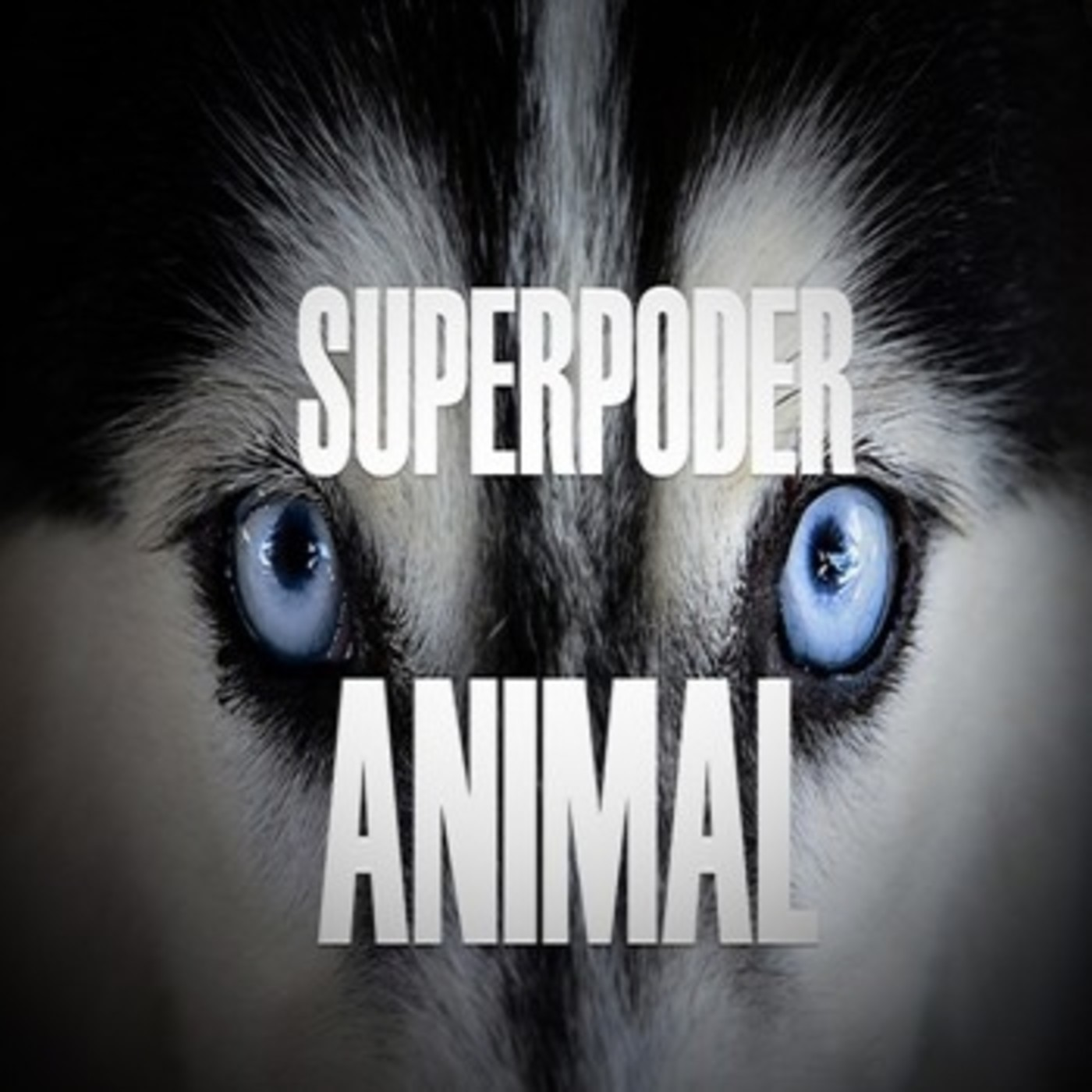 Cuarto milenio superpoder animal en cuarto milenio for Cuarto milenio episodios