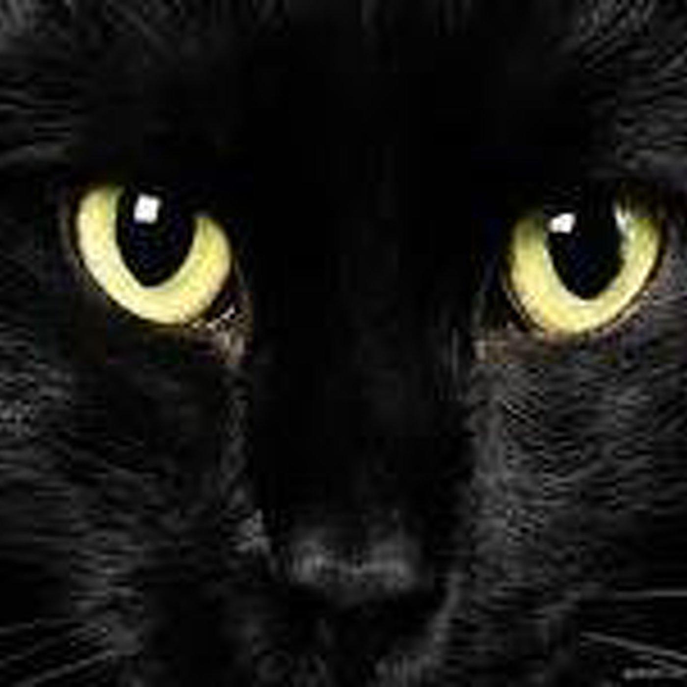Edgar allan poe el gato negro narrado por joan mora en - Disfraces el gato negro ...