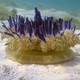 La Brújula de la Ciencia s07e05: Las medusas, un animal sin cerebro, también necesitan dormir