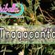 Nutribella - TRAGACANTO
