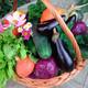 10_La importancia de la verdura