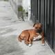 Reportaje: perros callejeros en quito