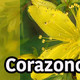 Nutribella - CORAZONCILLO