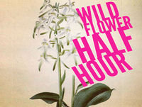 8: A wild flower Glastonbury?
