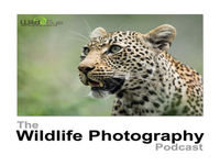 Episode 18 - What Is The Best Camera For Wildlife Photography?