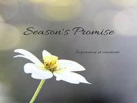 Saison's Promise Saison 3 - Pendant qu'elle tricote (2)