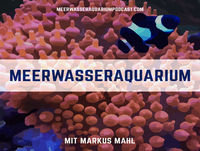 #0013 Borstenwürmer im Meerwasseraquarium