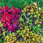 La inteligencia secreta de las plantas