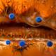 La Brújula de la Ciencia s07e17: Los ojos de las vieiras, visión con espejos en lugar de lentes