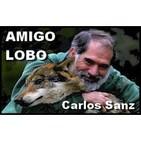 Entrevista a Carlos Sanz: La Exposición Amigo Lobo en Corazón de Carballo