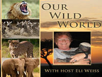 Encore: Predators and Pastoralists- with Tom Hill and BigLife Foundation