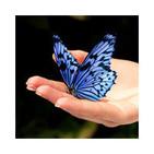 Podcast El Vuelo de la Mariposa